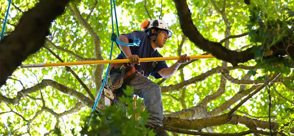 Plano Tree Service